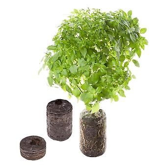 TREGREN Seed Capsules Basil Two Pcs