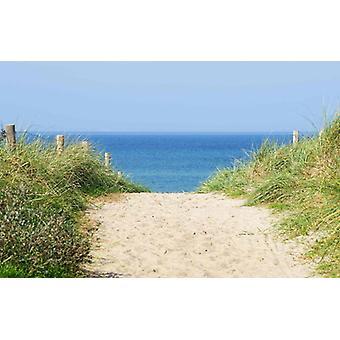 Tapete Mural Dune at the Ocean