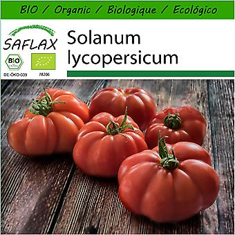 Saflax - 10 seeds - With soil - Organic - Tomato - Rouge de Marmande - BIO - Tomate - Marmande - BIO - Pomodoro - Rouge de Marmande - Ecológico - Tomate - Rouge de Marmande - Tomate - Rouge de Marmande