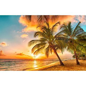 Tapete Mural Tropical Beach