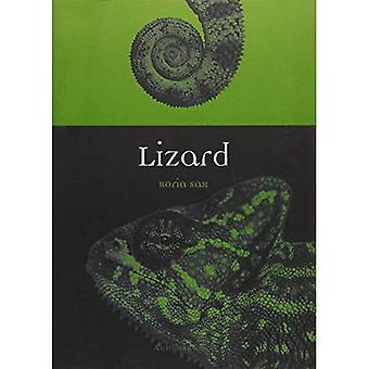Lizard (dyr)