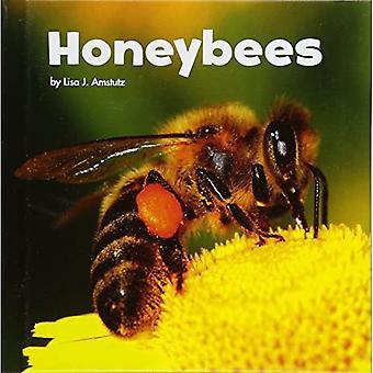 Honeybees (Little Pebble: Little Creatures)