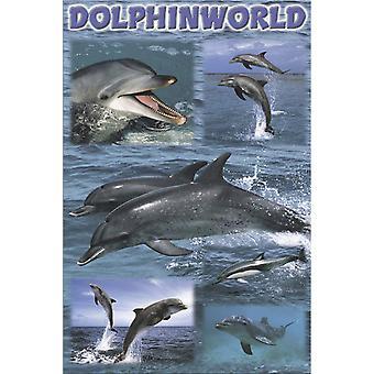 Poster - Studio B - 24x36 Dolphinworld Wall Art CJ3401D