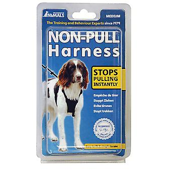 Company of Animals Non-Pull Harness Dog Training Control