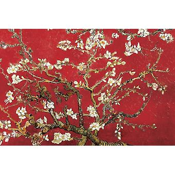 Van Gogh Almond Red Almond Tree in red Poster Poster Print