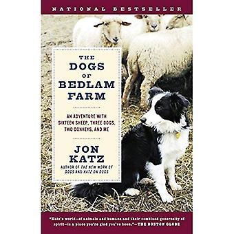 Les chiens de ferme de Bedlam: une aventure avec seize moutons, trois chiens, deux ânes et moi