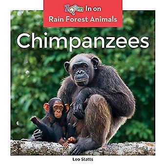 Simpanssit (Rain Forest eläimet)