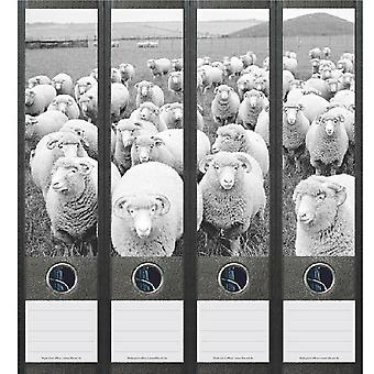 Spine label flock of sheep in black white