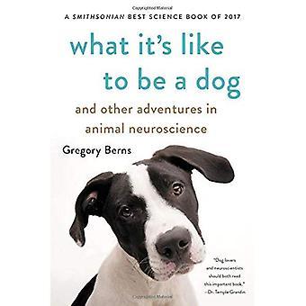 Ce que c'est que d'être un chien: et d'autres aventures en neurosciences animale