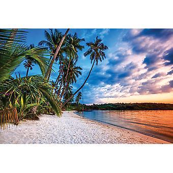 Wall Mural Tropical beach at sunset (169