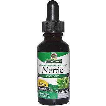 Brændenælde blad, alkoholfri, 2000 mg (30 ml) – natur ' s svar