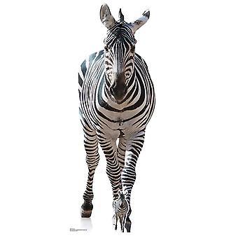 Zebra Lifesize wycinany karton/standup/Standee