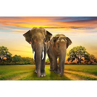 Fond d'écran Mural Elephants Family
