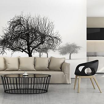 Tapeter - vinter - träd