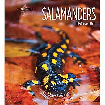 Salamandrar (levande vild)