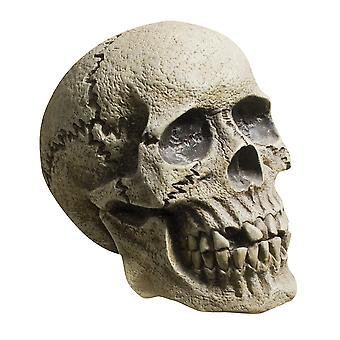 Rotting Skull Tabletop Costume Day of The Dead Halloween Party Decoration Prop