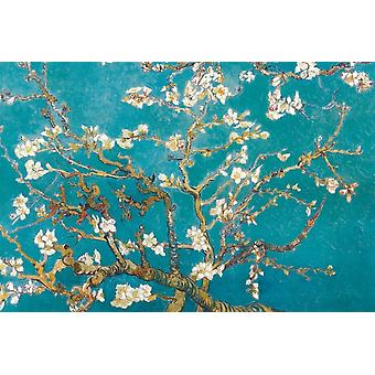 Van Gogh Almond Blossom Poster Print Poster Poster Print