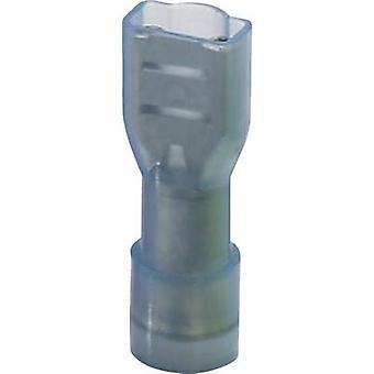 Phoenix Contact 3240547 Blade kärl Connector bredd: 6,3 mm kontakten tjocklek: 0,8 mm 180 ° isolerade blå 25 dator