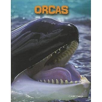 Orcas (Heinemann Infosearch: Living in the Wild: Sea Mammals)