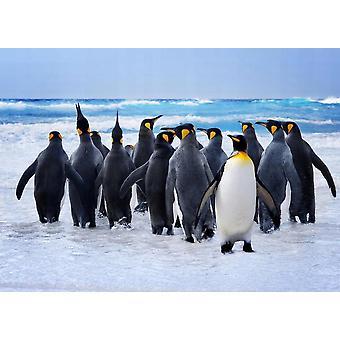 Wallpaper muurschildering koning pinguïns ik