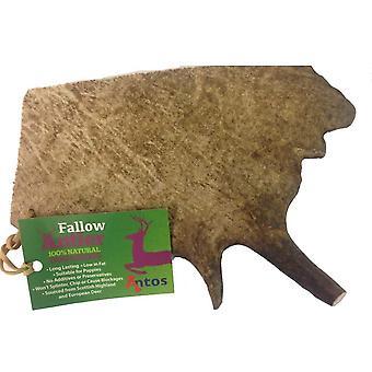 Antos Fallow Deer Antlers - Moyen