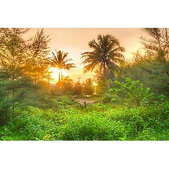 Tapet väggmålning Amazing Jungle Sunrise
