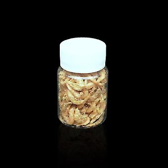 Dried Shrimps Ant Food
