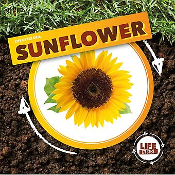 Life Cycle of a Sunflower by Kirsty Holmes