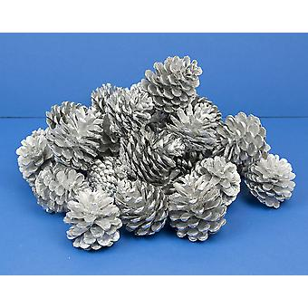 Giant 1kg Bag of Silver Pine or Fir Cones for Christmas Crafts