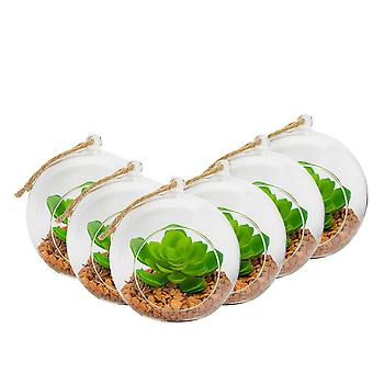 Nicola Spring Glass Plant Terrarium Set for Succulent Plants Ferns Cactus - Tabletop or Hanging Display - 120mm - Pack of 6