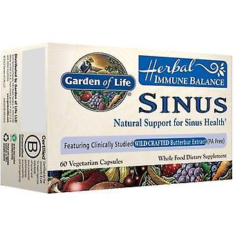 Jardin de vie équilibre immunitaire, Sinus 60 vcaps
