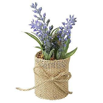 Lavendel in pot