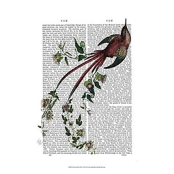 Passion Flower Bird Poster Print by Fab Funky (13 x 19)