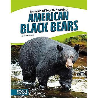 Ours noir américain (animaux d'Amérique du Nord)
