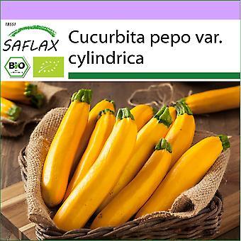 Saflax - 5 zaden - Biologisch - Courgette - Gold Rush - BIO - Courgette - Gold Rush - BIO - Zucchina - Gold Rush - Ecológico - Calabacín - Fiebre del Oro - BIO - Ziucchini - Gold Rush