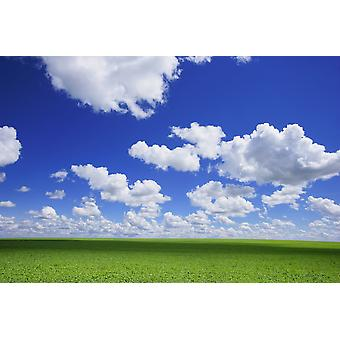 Белые облака в небе и зеленый луг PosterPrint