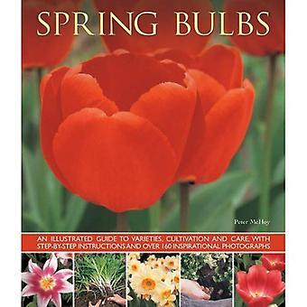 Bulbes de printemps: An Illustrated Guide to variétés, de culture et de soins, avec des Instructions étape par étape et plus...