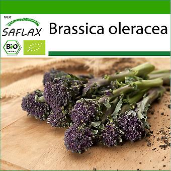 Saflax - 150 seeds - With soil - Organic - Broccoli - Early Purple - BIO - Brocoli - Early purple - BIO - Broccolo - Early Purple - Ecológico - Brócoli - Morado Temprano - BIO - Broccoli - Early Purple