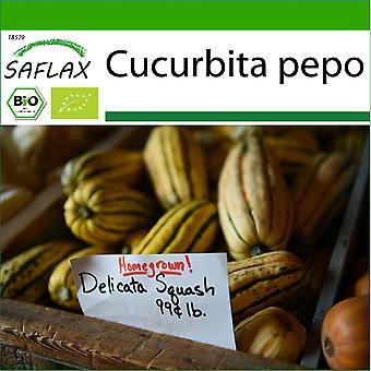 Saflax - 6 frø - Med jord - Organisk - Squash - Delikatesse - BIO - Courge - Delicata - BIO - Zucca - Delikatesse - Ecológico - Calabaza - Delicata - BIO - Kürbis - Delicata