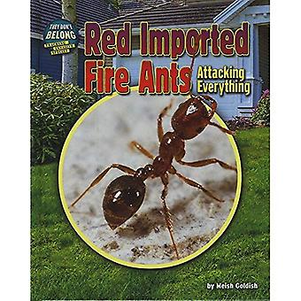 Red Imported Fire Ants: Attacking Everything (They Don't Belong)