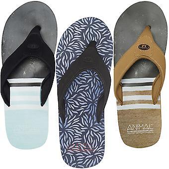 Animal Mens Jekyl înot vara plaja de vacanță Thongs sandale flip flops