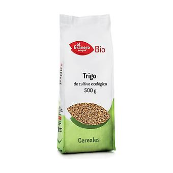 Wheat grain 500 g