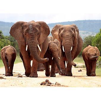 Fondo de pantalla Mural African Elephant Red