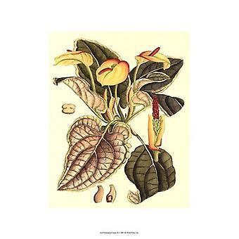 Botaniska Fantasy III affisch Skriv (13 x 19)