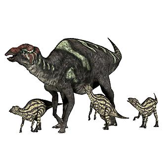 Maiasaura was a duck-billed herbivorous dinosaur that lived in Montana USA in the Cretaceous Era Poster Print