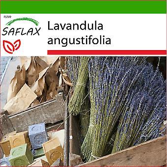 Saflax - 150 Samen - mit Boden - englischer Lavendel - Lavande Vraie - Lavanda - Lavanda - Echter Lavendel