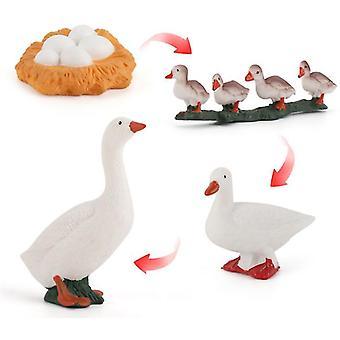 2ks kačica 4ks kuracie, kačacie a husacie rastový cyklus vedecký prieskum set miniatúrne hydina zviera model detská toy az16285