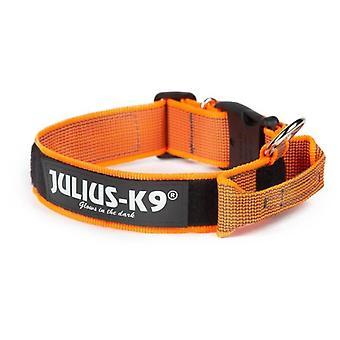 Julius K9 Collar Color & Gray con Asa Naranja