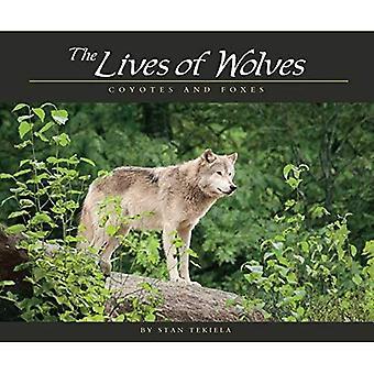 Het leven van wolven: Coyotes en vossen