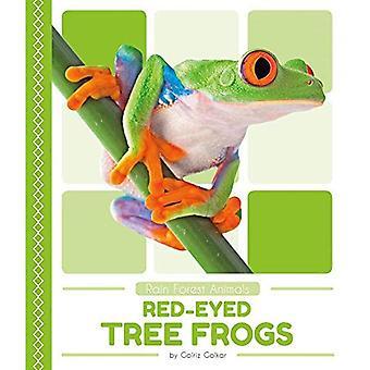 Rode-ogen boomkikkers (regenwoud dieren)